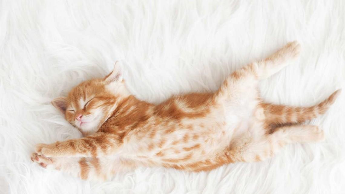 猫の長期留守番はあり?
