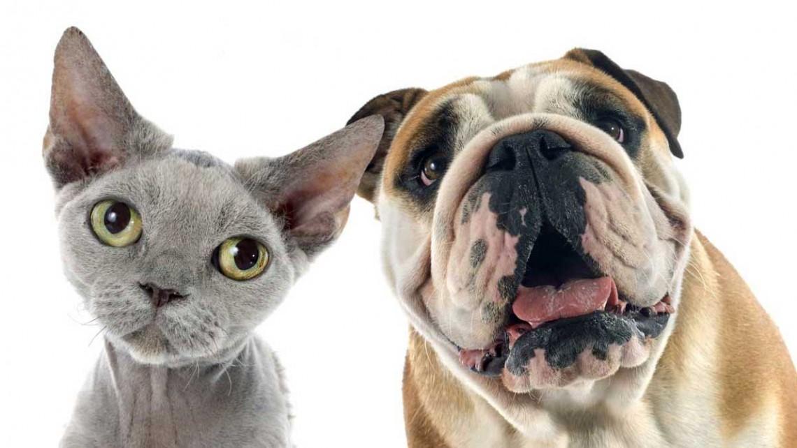 BSC_犬・猫