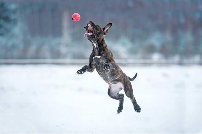 犬・雪で喜ぶ